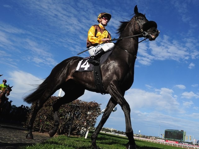 Alpine Eagle grins as he struts out majestically ahead of the Makybe Diva Stakes Day on September 12, 2015